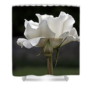 White Simplicity Rose Profile Shower Curtain