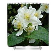 White Spring Blossom Shower Curtain