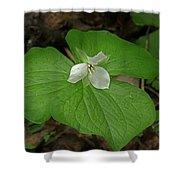 White Spring Trillium Shower Curtain