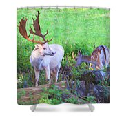 White Stag And Hind 2 Shower Curtain