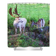 White Stag And Hind Shower Curtain