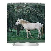 White Stallion In The Woods  Shower Curtain
