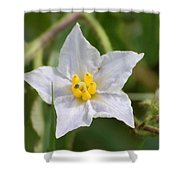 White Star Shower Curtain