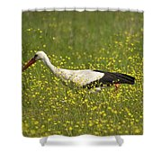 White Stork Looking For Frogs Shower Curtain