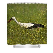White Stork Looking Fr Frogs Shower Curtain