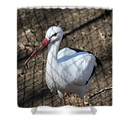 White Stork Shower Curtain