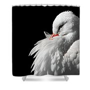 White Stork Shower Curtain by Wim Lanclus