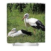 White Storks Shower Curtain by Teresa Zieba
