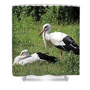 White Storks Shower Curtain