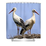 White Storks Shower Curtain by Wim Lanclus