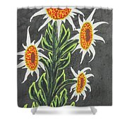 White Sunflowers Shower Curtain