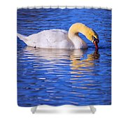 White Swan Drinking Water In A Pond Shower Curtain