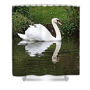 White Swan In Belgium Park Shower Curtain