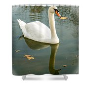 White Swan With Reflection Shower Curtain