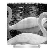 White Swans Shower Curtain