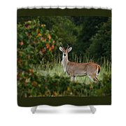 White-tail Buck Through The Trees Shower Curtain