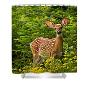White-tail Fawn Shower Curtain