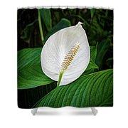 White Tail-flower Shower Curtain