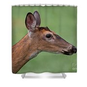 White Tail. Shower Curtain