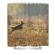 White Tail Morning Shower Curtain