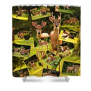 White-tailed Collage Shower Curtain