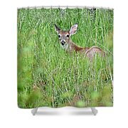 White-tailed Deer Bedded Down In Tall Grass Shower Curtain