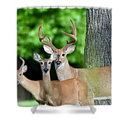 White-tailed Deer Family Shower Curtain