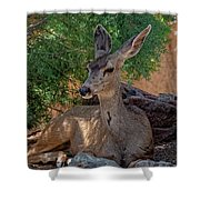 White-tailed Deer H1829 Shower Curtain
