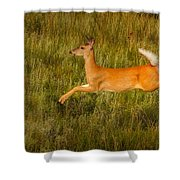 White-tailed Doe Leaping Shower Curtain