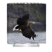 White-tailed Eagle Against Cliffs Shower Curtain