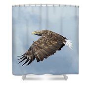 White-tailed Eagle Against Clouds Shower Curtain