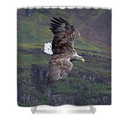 White-tailed Eagle Banks Shower Curtain