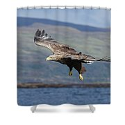 White-tailed Eagle Over Loch Shower Curtain