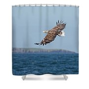 White-tailed Eagle Over The Sea Shower Curtain