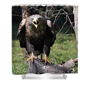White Tailed Eagle Screaming Nature Wildlife Scene Shower Curtain