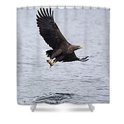 White-tailed Eagle With Catch Shower Curtain