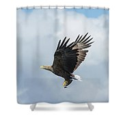 White-tailed Eagle With Fish Shower Curtain