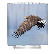 White-tailed Eagle With Lunch Shower Curtain