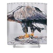 White Tailed Sea Eagle Shower Curtain
