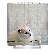 White Shower Curtain