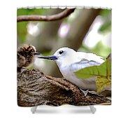 White Terns Koa And Parent...bird Love Shower Curtain