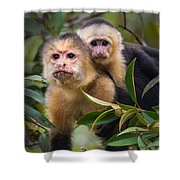 White-throated Capuchin Monkeys Cebus Shower Curtain