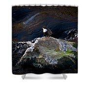 White-throated Dipper Nr 1 Shower Curtain