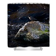 White-throated Dipper Nr 2 Shower Curtain