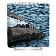 White-throated Dipper Nr 3 Shower Curtain