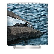 White-throated Dipper Nr 4 Shower Curtain