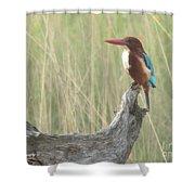 White Throated Kingfisher Shower Curtain