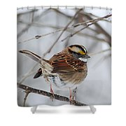 White Throated Sparrow 2 Shower Curtain