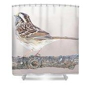 White-throated Sparrow Looking Skyward Shower Curtain