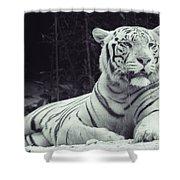 White Tiger 16 Shower Curtain